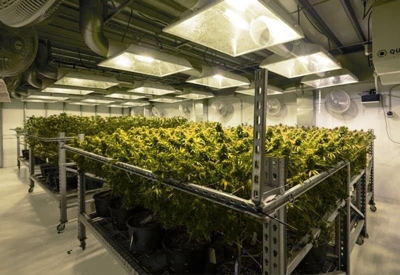 Interior of a prefab steel agricultural cannabis grow-ops facility